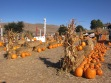 Moore's Pumpkin Patch